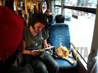 a street cat named bob book (10)