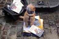 a street cat named bob book (12)