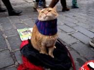 a street cat named bob book (13)
