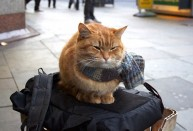 a street cat named bob book (15)