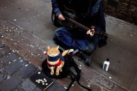 a street cat named bob book (18)