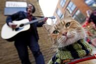 a street cat named bob book (2)