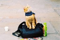 a street cat named bob book (24)