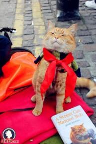 a street cat named bob book (27)
