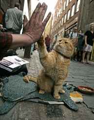 a street cat named bob book (28)