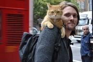 a street cat named bob book (30)