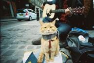 a street cat named bob book (4)