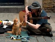 a street cat named bob book (8)