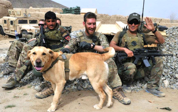 سگ ارتشی افغان