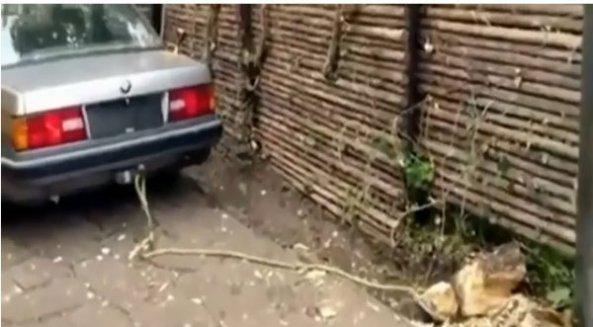 پت و مت می خواهند ریشه یک گیاه را از خاک در بیاورند
