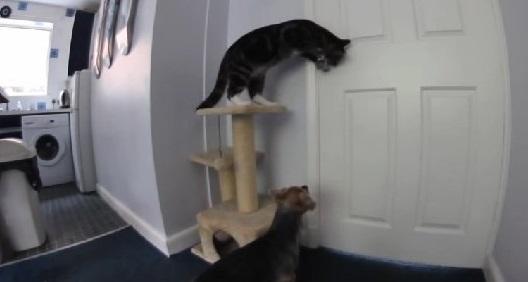 گربه و سگ خانه بالاخره موفق به فرار از آشپزخانه شدند